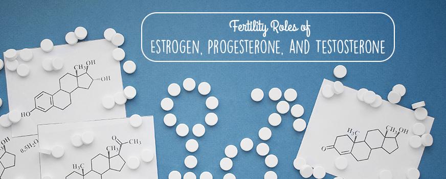 Fertility Roles of Estrogen, Progesterone, and Testosterone Header