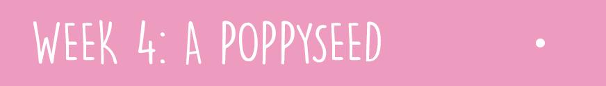 First Trimester Week 4: A poppyseed