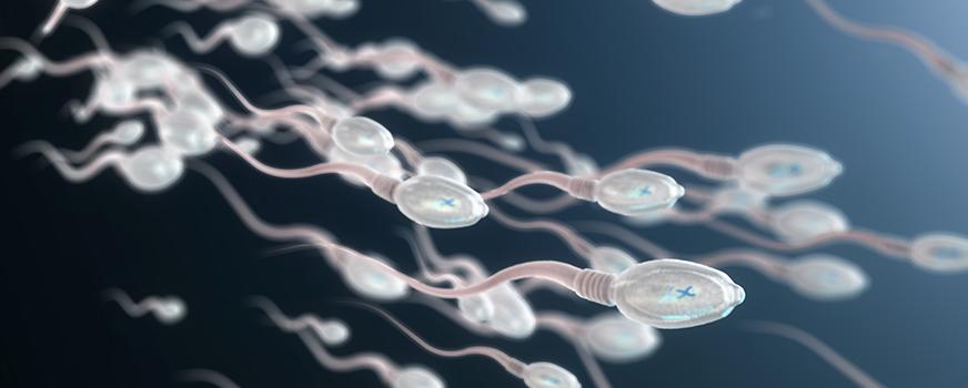 Healthy Sperm for Male Fertility