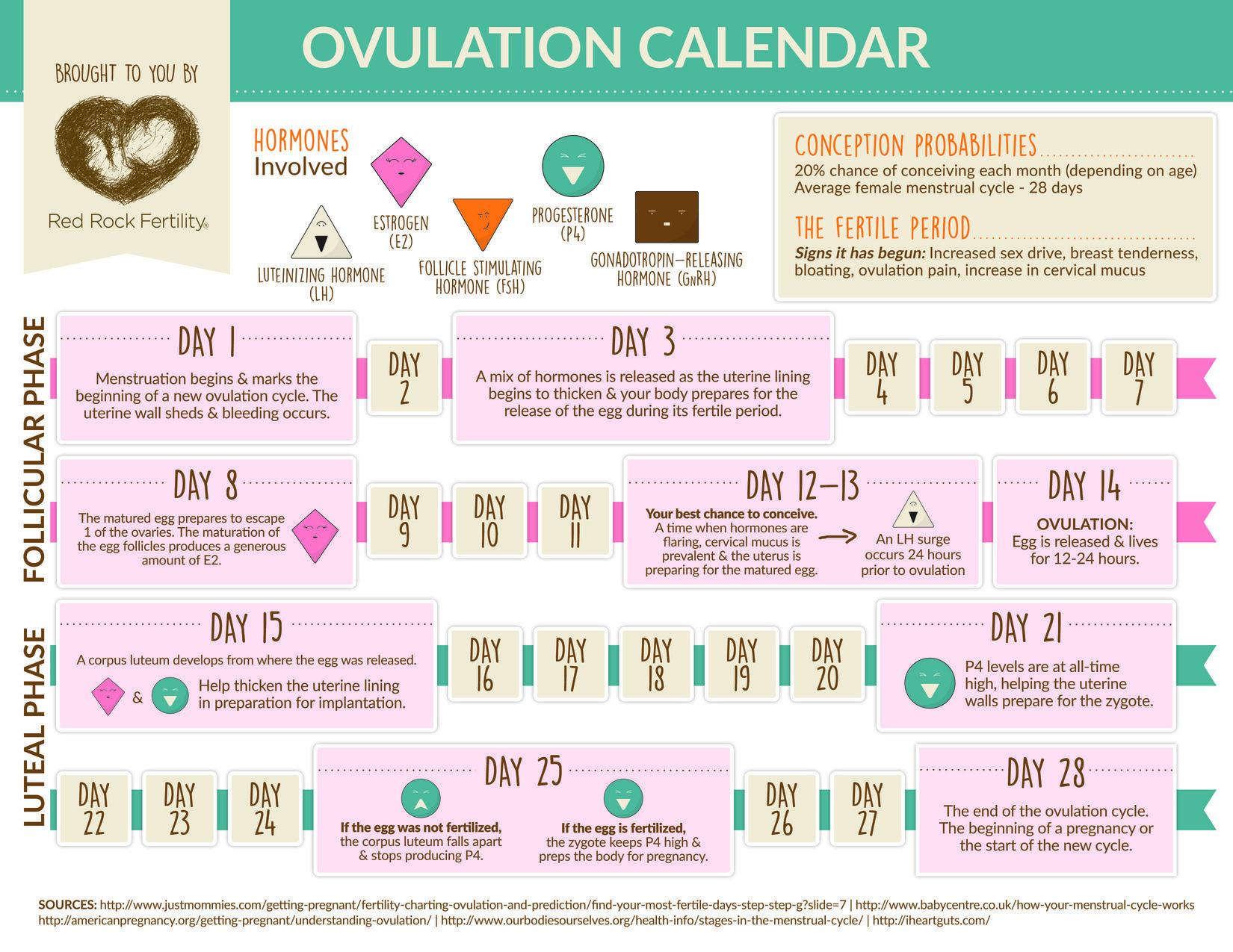 Ovulation Cycle Calendar