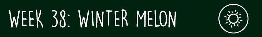 Third Trimester Week 38: A winter melon